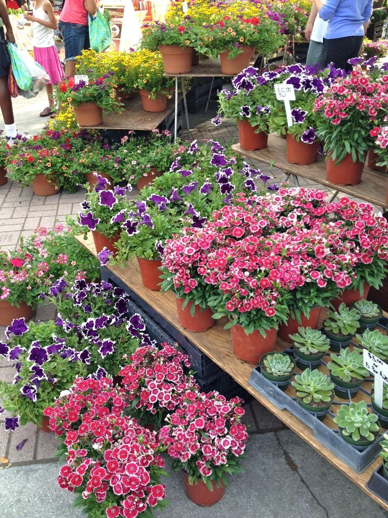 Winter Park Farmers Market flowers