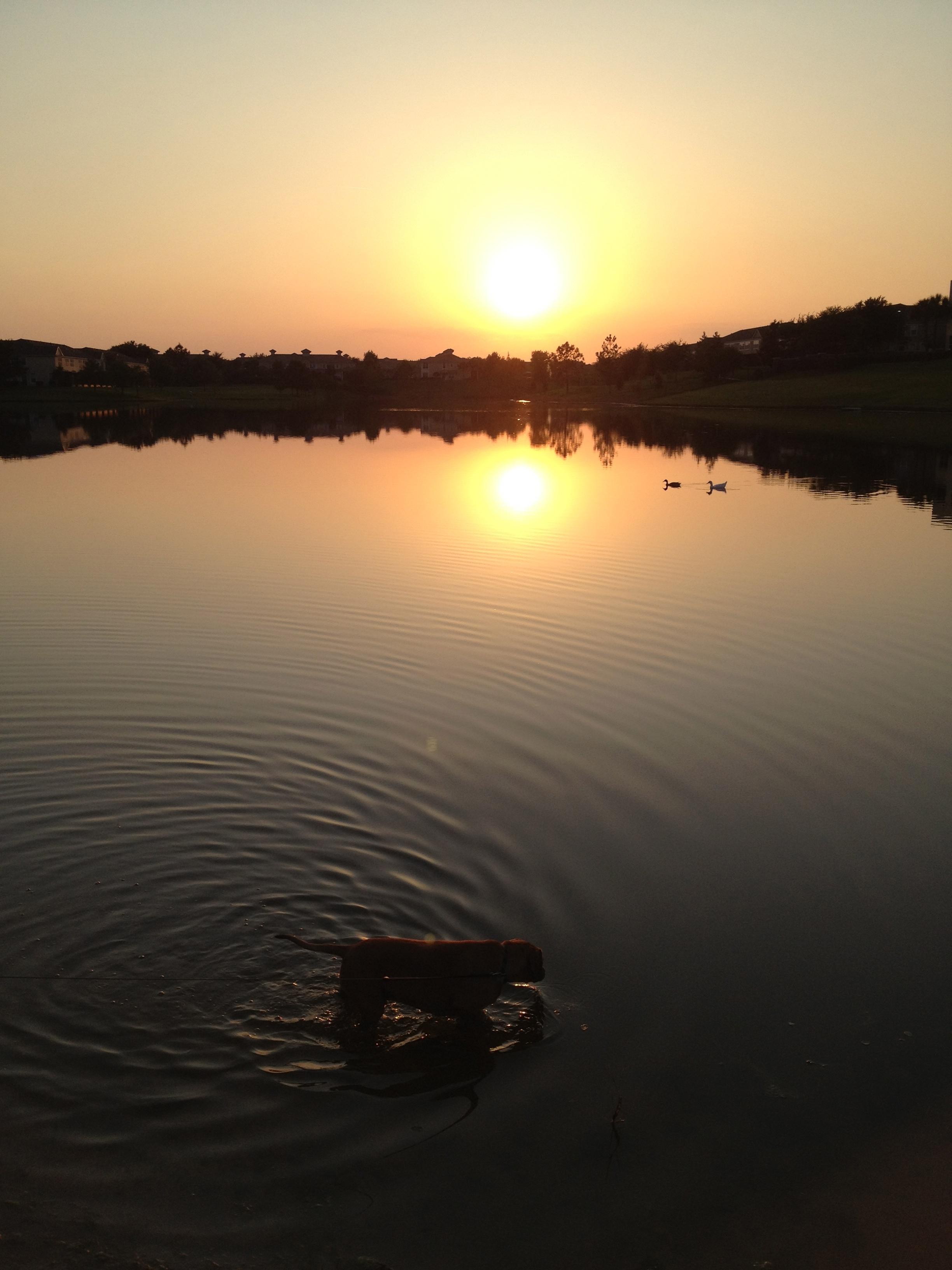 Roadie in the lake