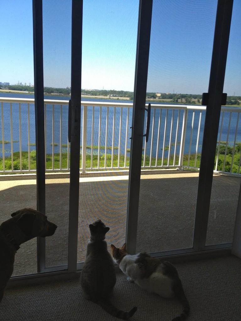 Pets looking outside window