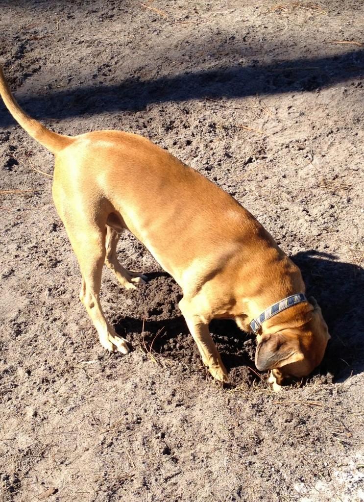 Roadie Digging