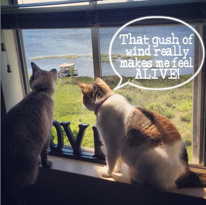 Kitties at window