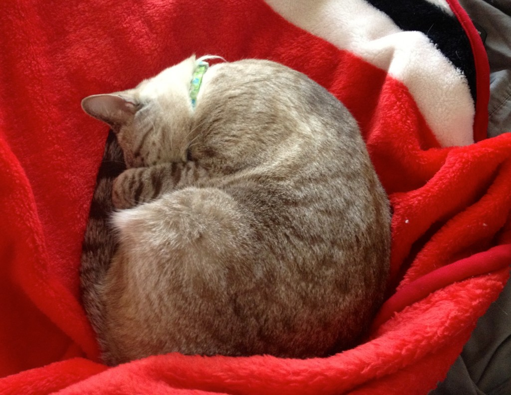 Cat Sleeping in a Ball