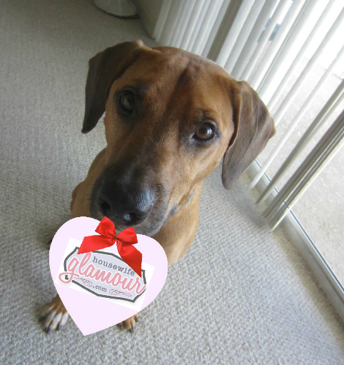 Cute Valentine Dog