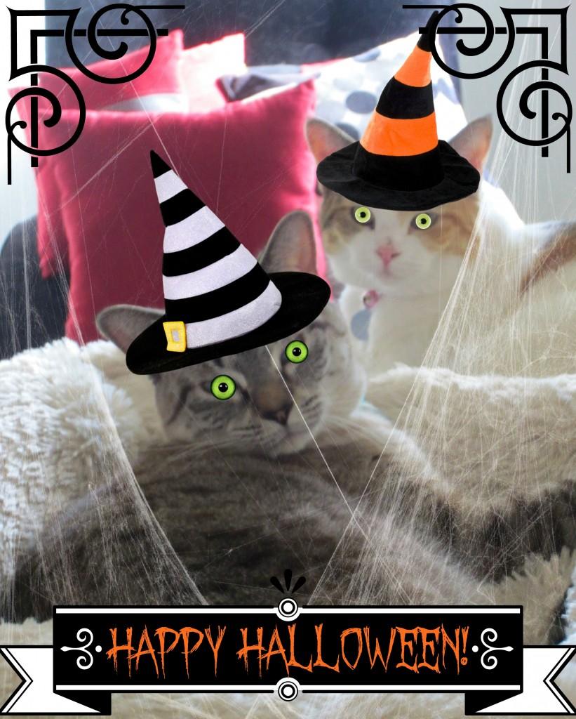 Happy Halloween Cats