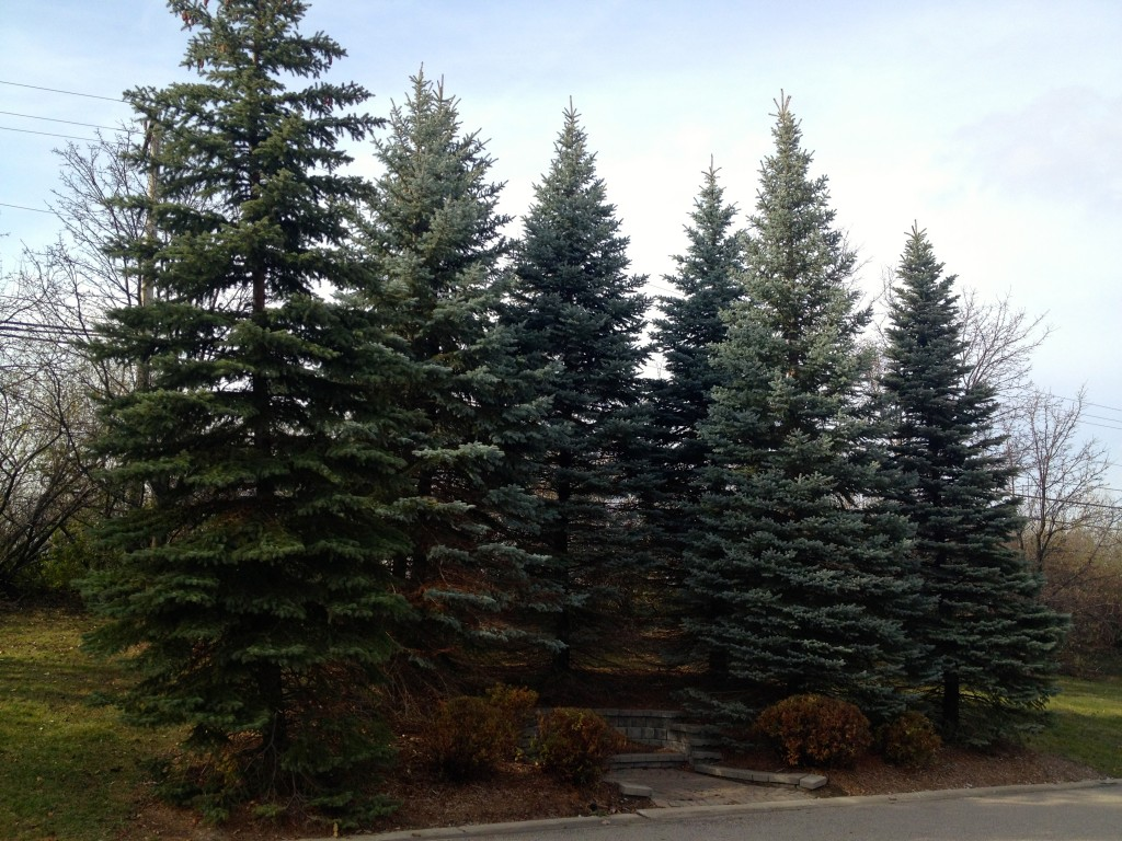 Michigan Trees