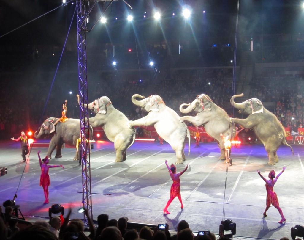ringling bros. circus elephants