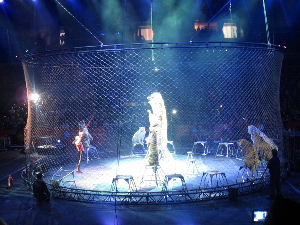 tigers at circus