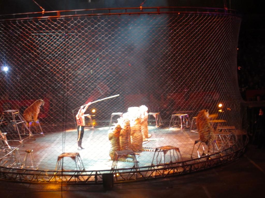 tigers doing tricks at circus