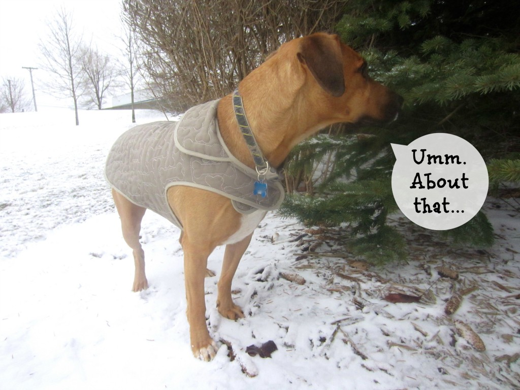 Roadie unsure of snow