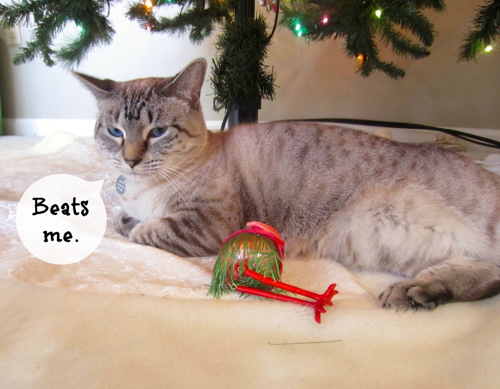 cat under the tree with ornament