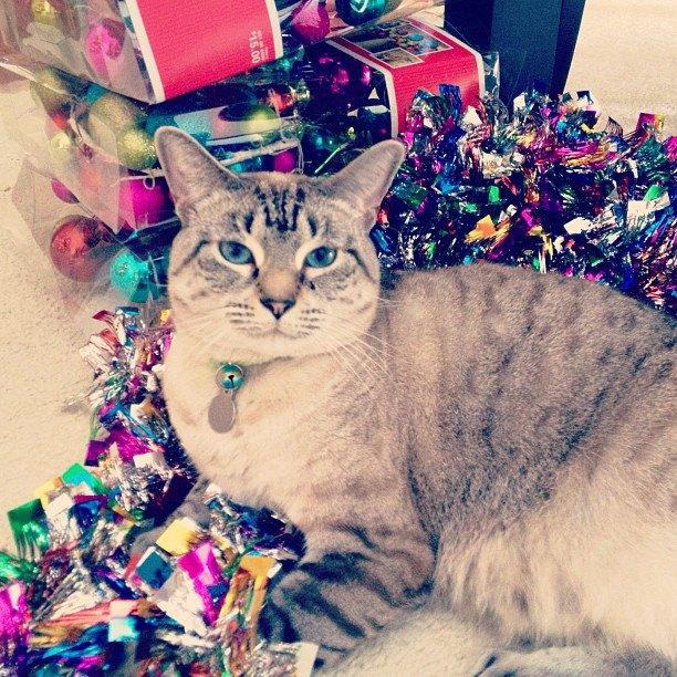 Aspen in Christmas decorat