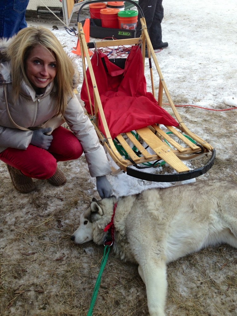 petting dogsled dog