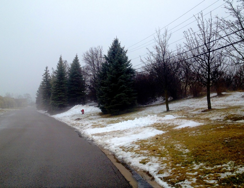 fog in neighborhood