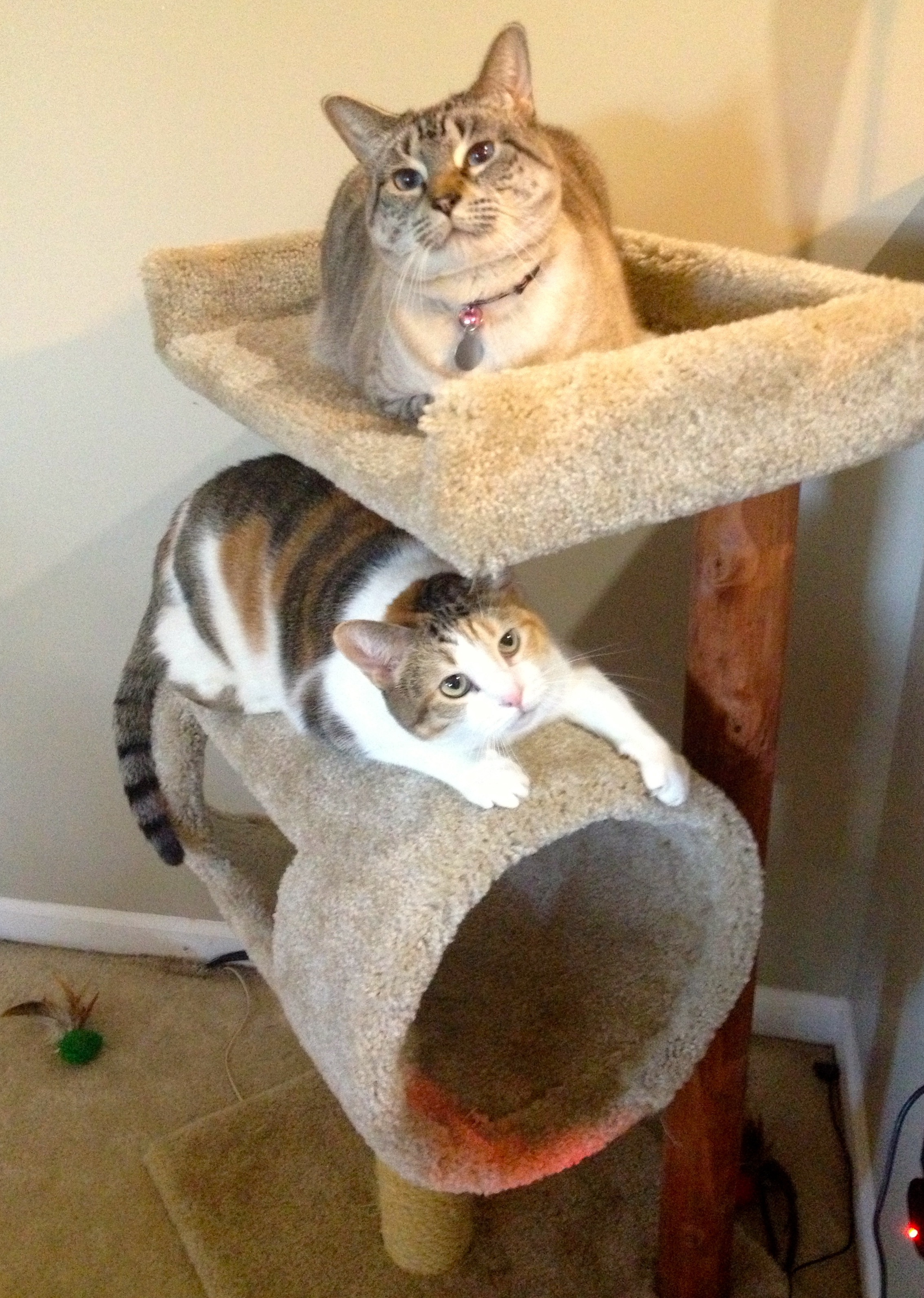 cats on cat tree
