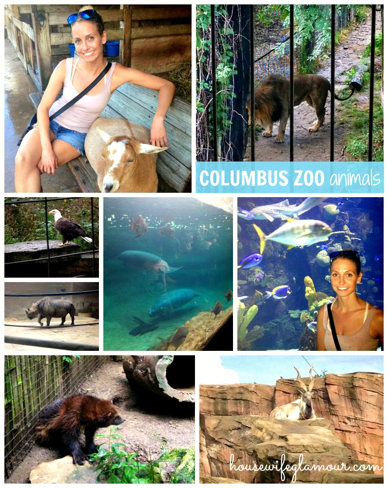 Animals at Colubus Zoo 2013