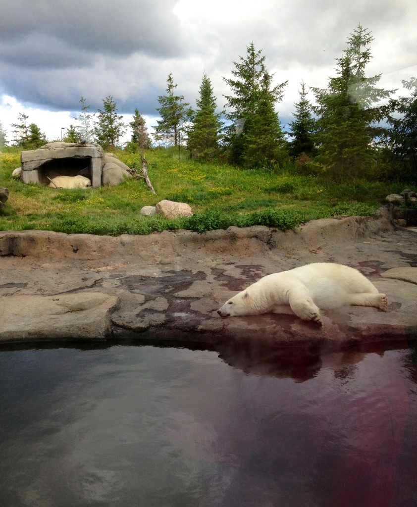 polar bear exhibit colubus zoo