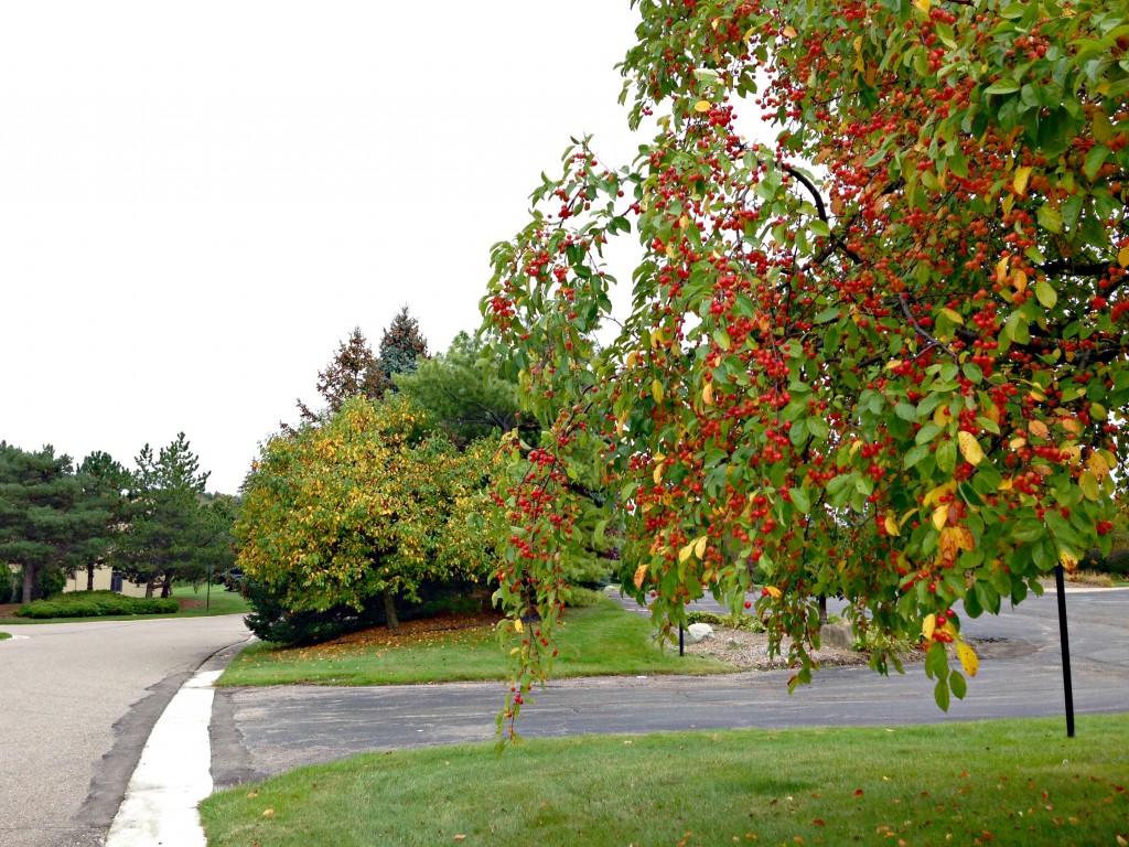 Fall in neighborhood