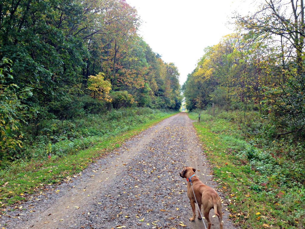 Fall trail runs with roadie