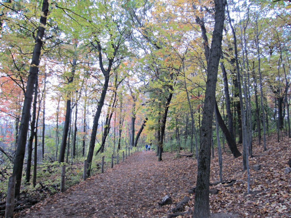 Oakland County Park dog friends trails
