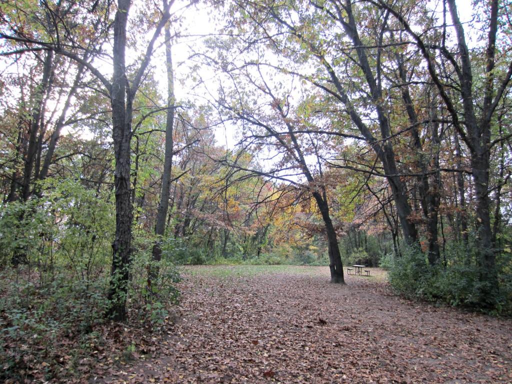 Orion Oaks Dog Park woods