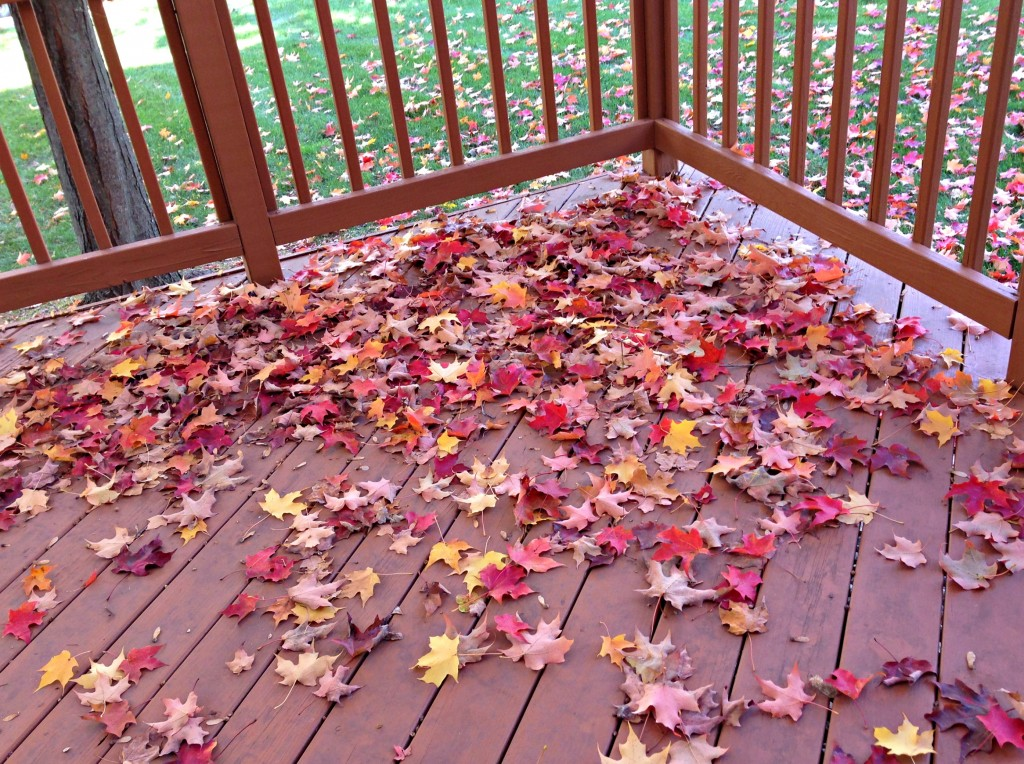 fall leaves on backyard porch
