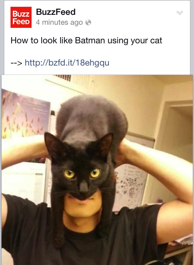 Batman kitty Buzzfeed