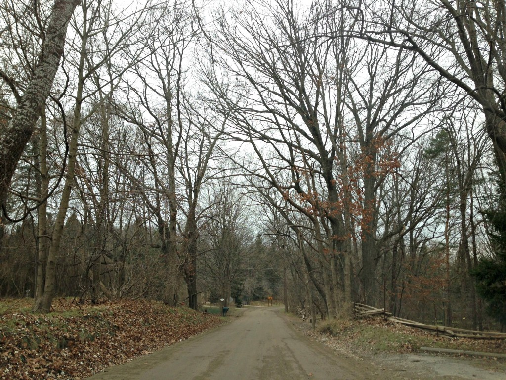 bare trees on back road