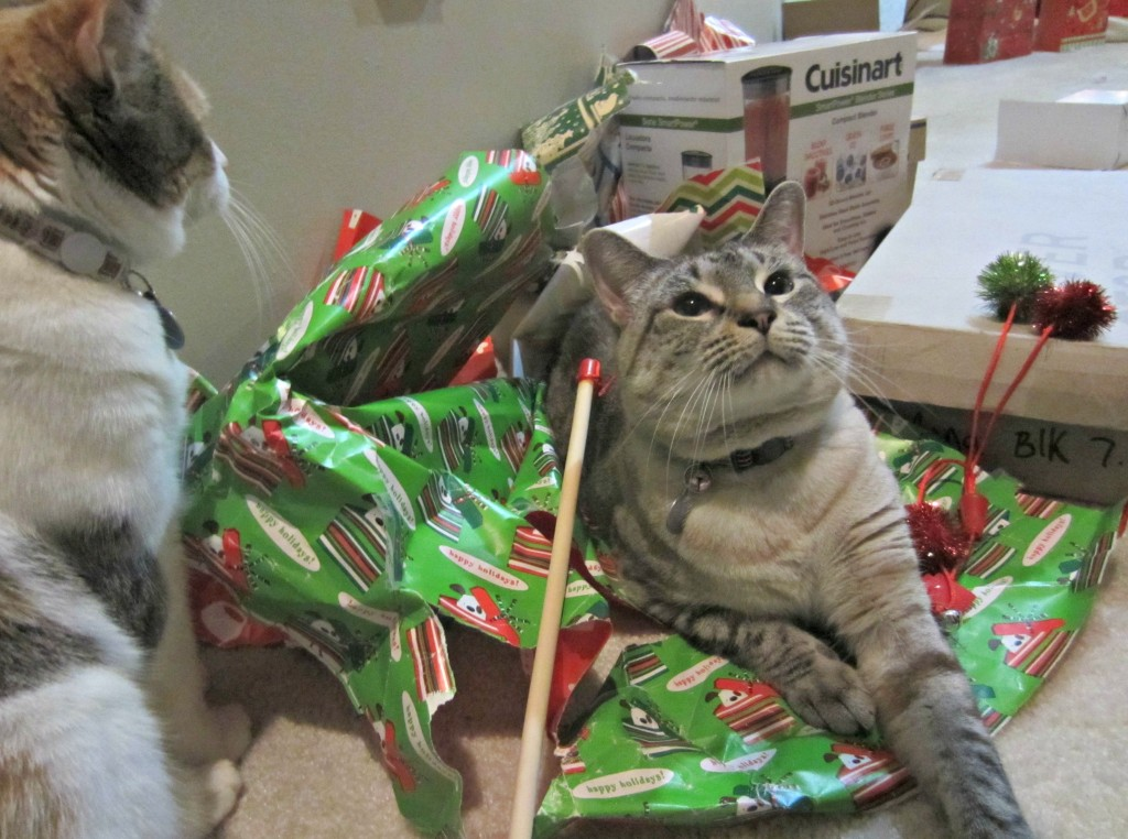 cats on presents
