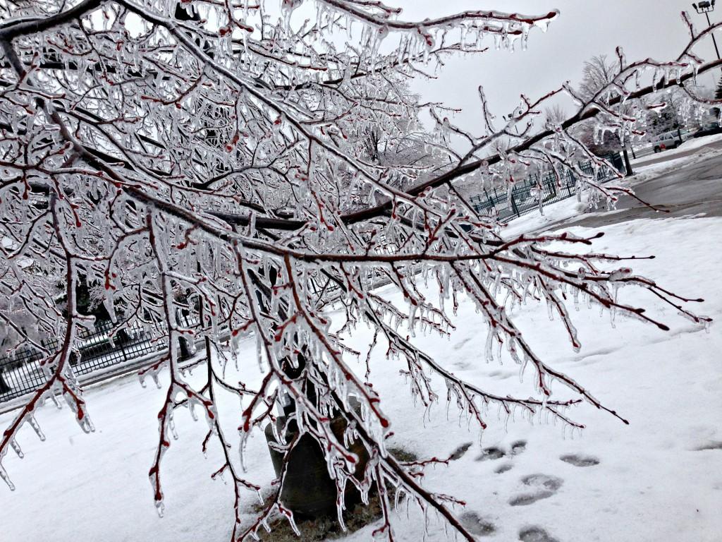 icesicle trees