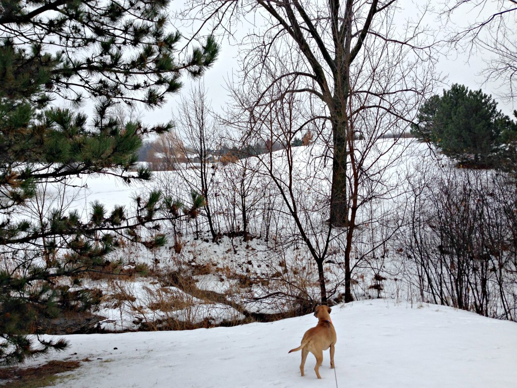 morning walk with roadie in snow