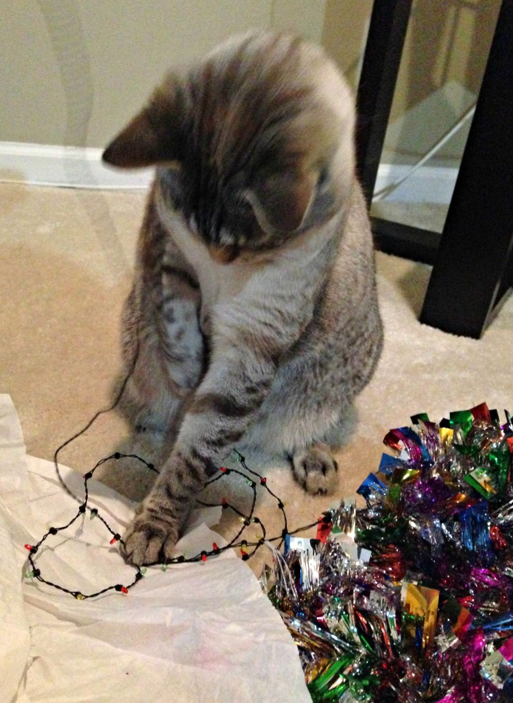 aspen playing with christmas lights