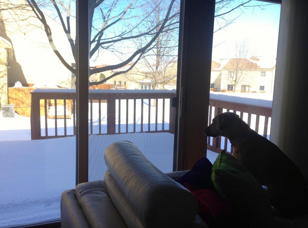 roadie looking out window