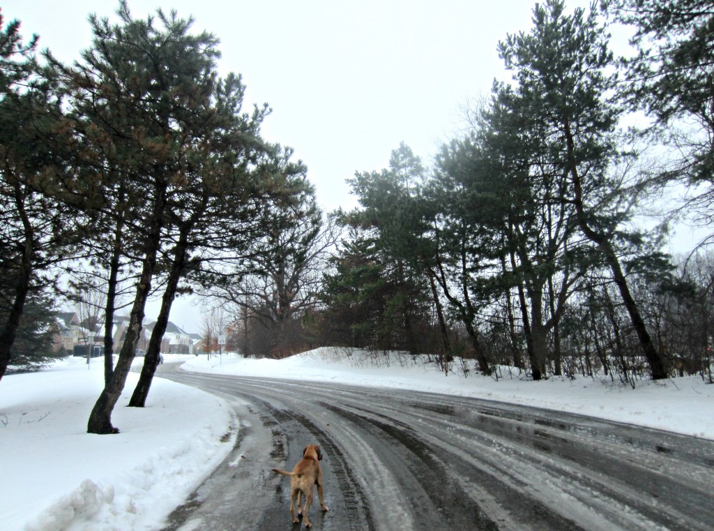 walking roadie in heavy snow