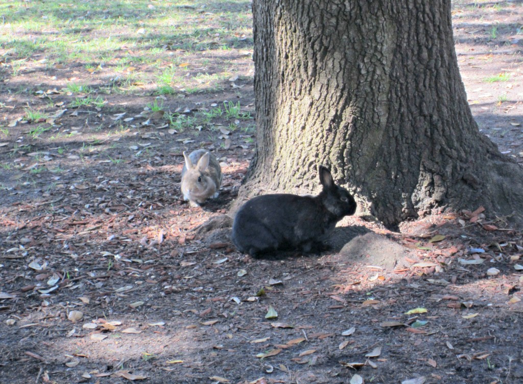 bunnies in the park