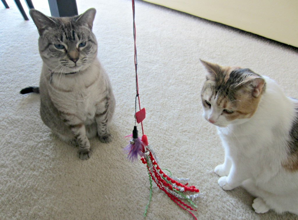 kitties with toy