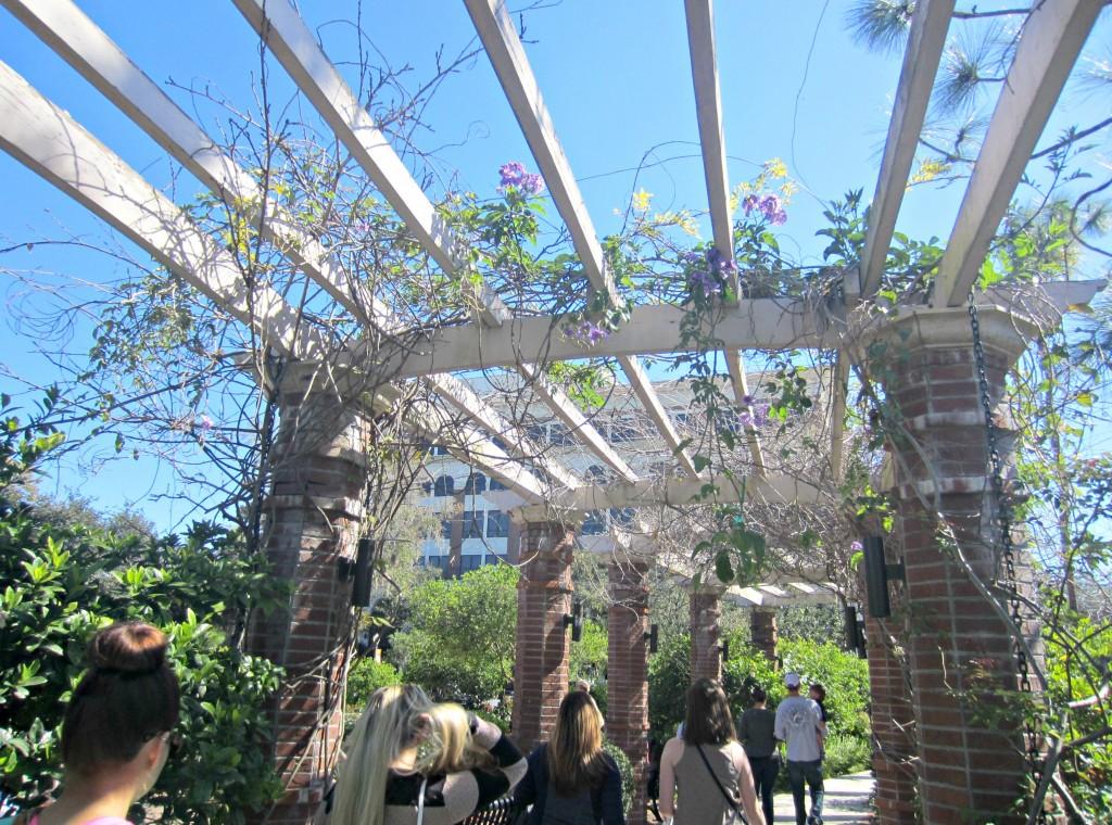 park ave rose garden walkway
