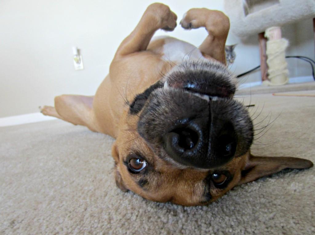 roadie on the floor