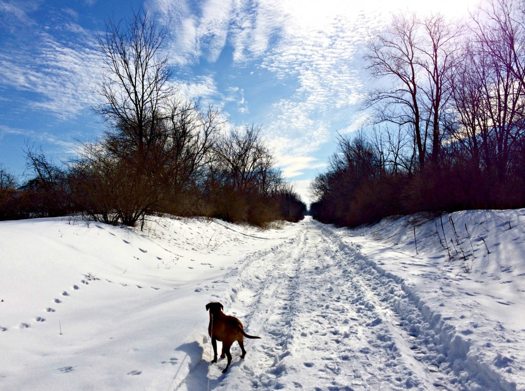 running snowy trails with roadie 2