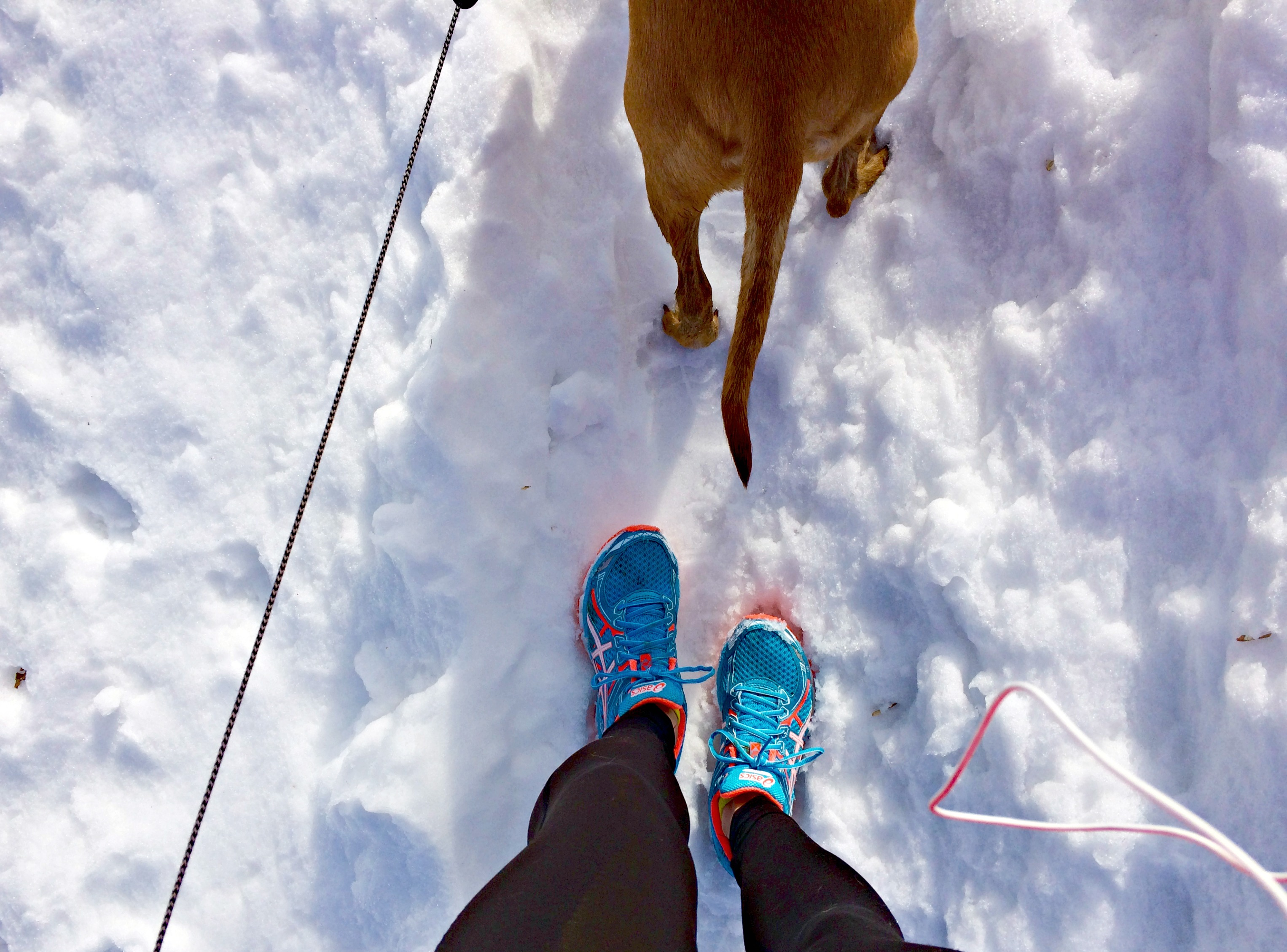 running snowy trails with roadie 3