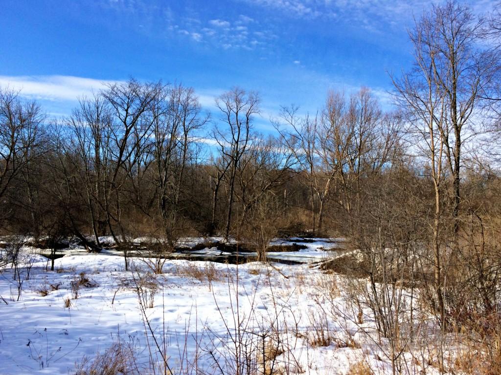 snowy trails in winter