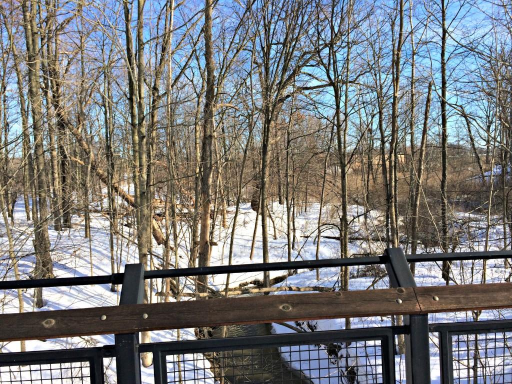 snowy trails in winter 2