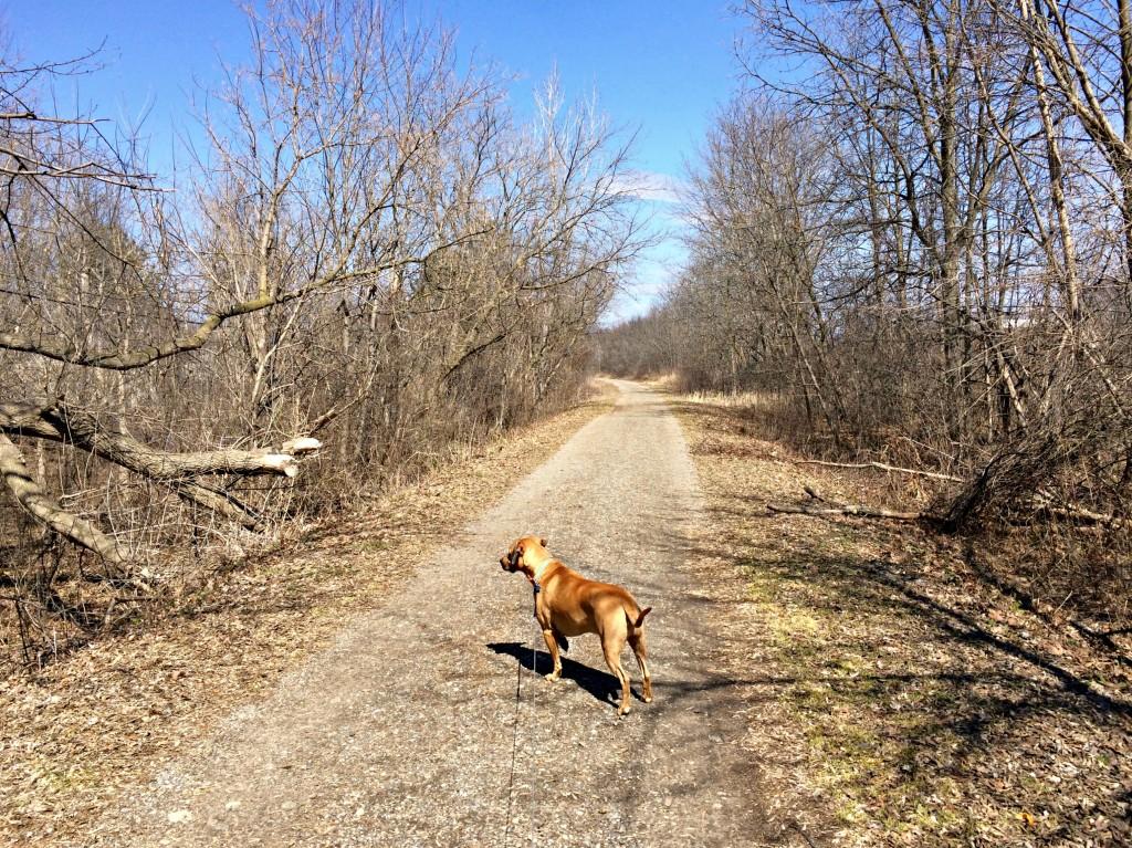 Roadie on trail