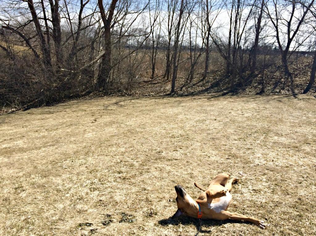 Roadie rolling in grass