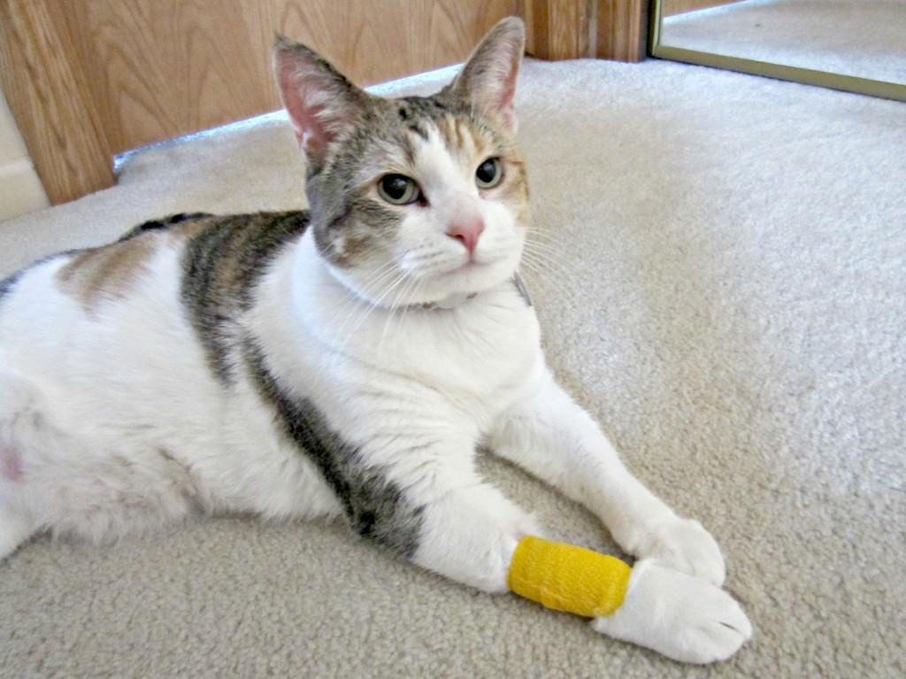 cali in bandage