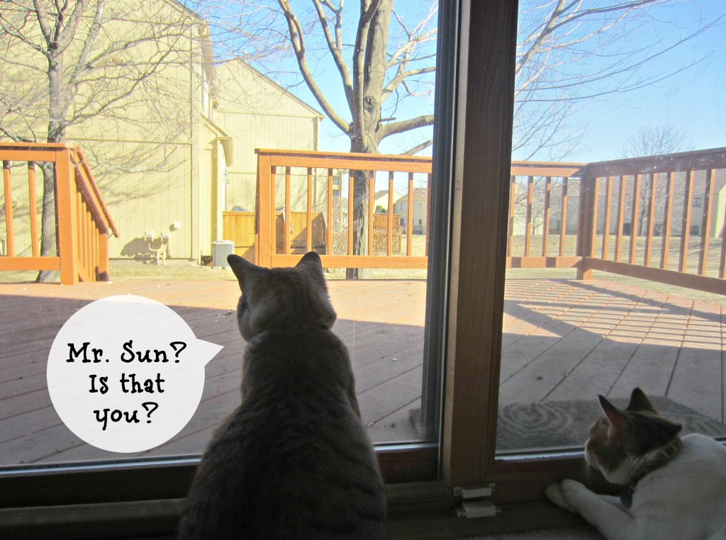 cats looking out window at sun