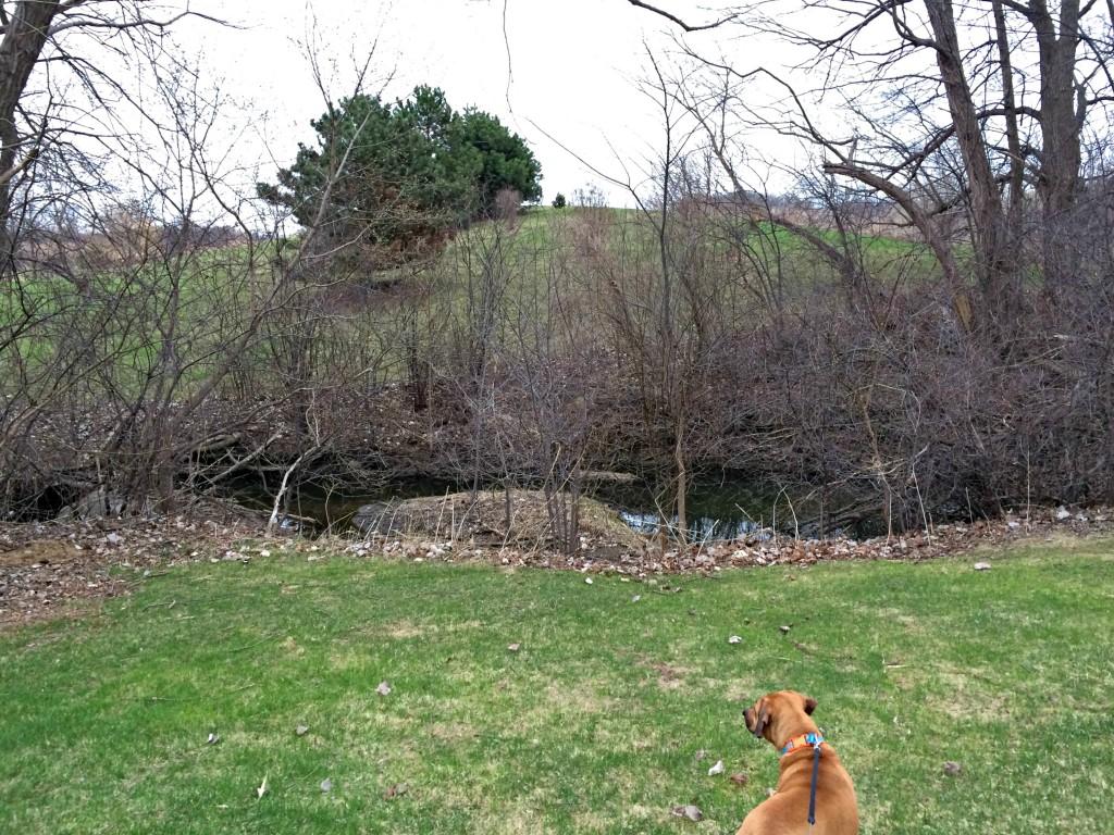roadie in green grass