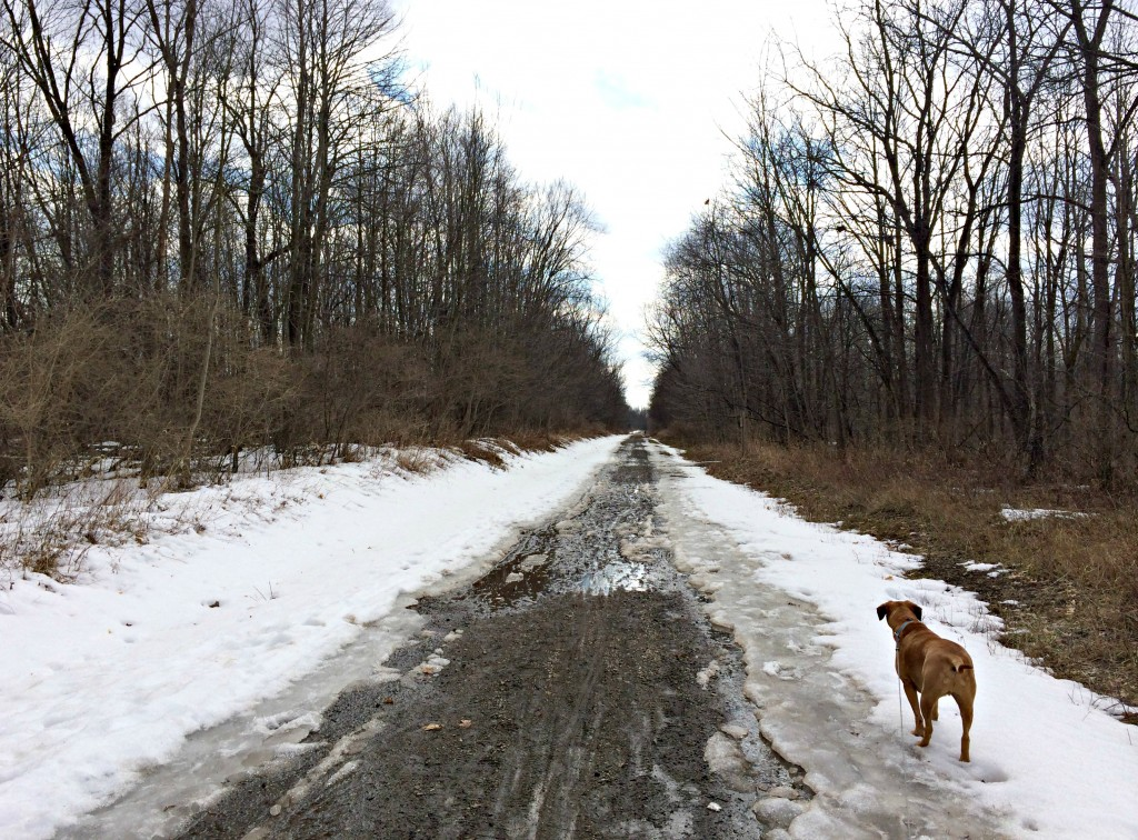 running trails with roadie 3