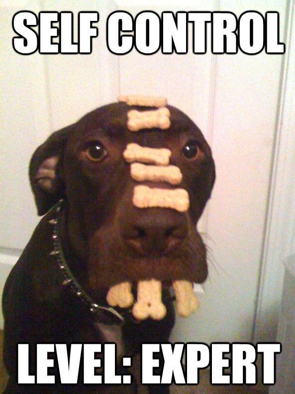 self control level expert