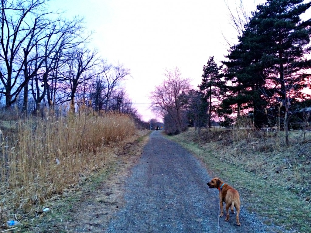 sunset run with roadie 1
