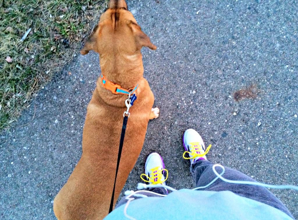 sunset run with roadie 2